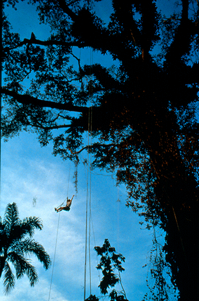 Meg Lowman dangling from a Great Kapok tree along the Amazon River in Peru – Photo Provided by Meg Lowman