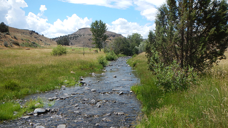Water Temperature Transaction Tool: Rock Creek