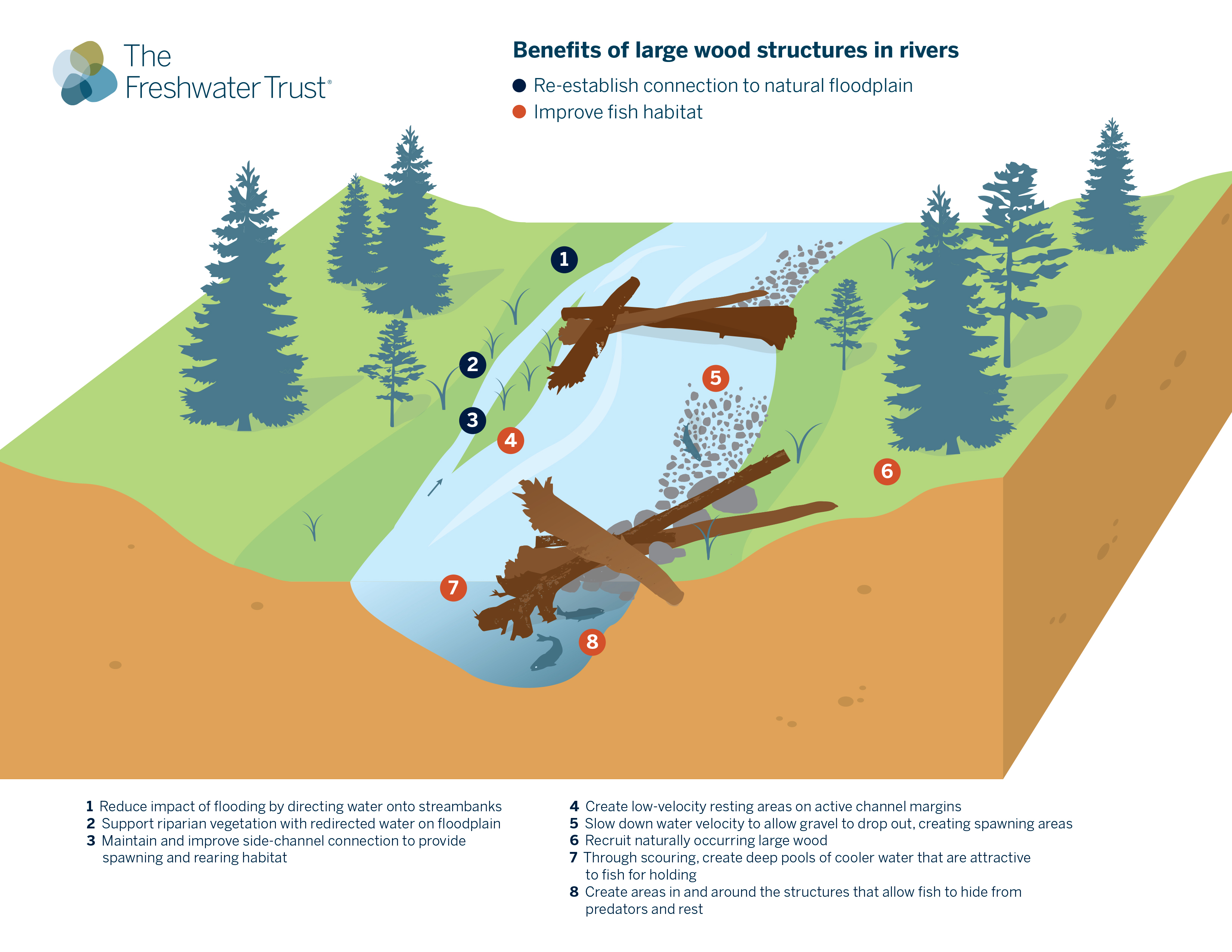 Infographic benefits of large wood structures in rivers the infographic benefits of large wood structures in rivers the freshwater trust pooptronica
