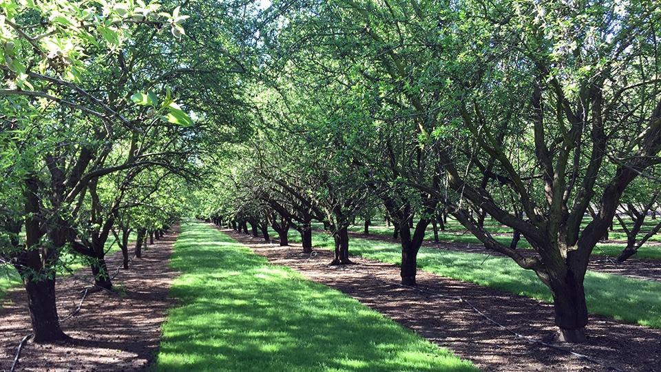 The Sacramento-San Joaquin