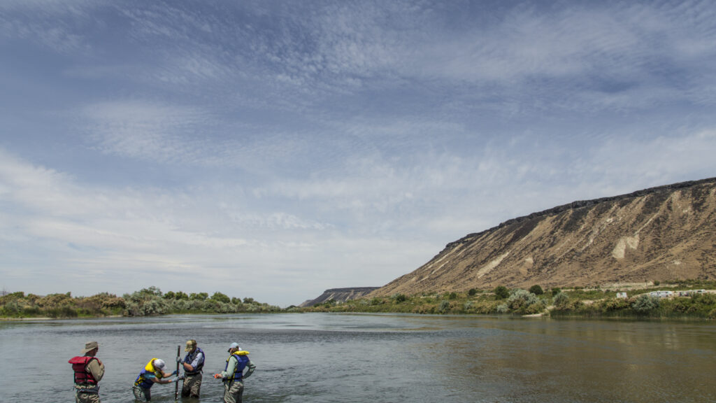 In partnership with Idaho Power Company, TFT is replanting key tributaries while also deepening the main river channel and enhancing natural floodplains to improve water quality, velocity and fish habitat.